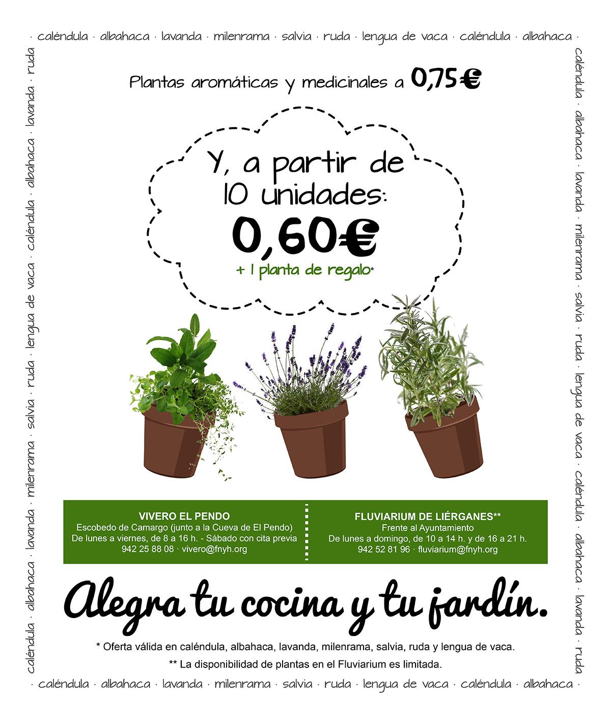 Oferta plantas aromáticas Vivero El Pendo