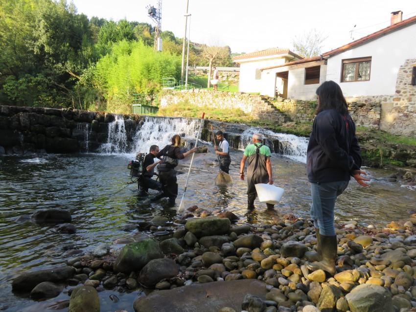 Los peces rescatados se llevan a una zona de río tranquila lejos de la influencia de la obra